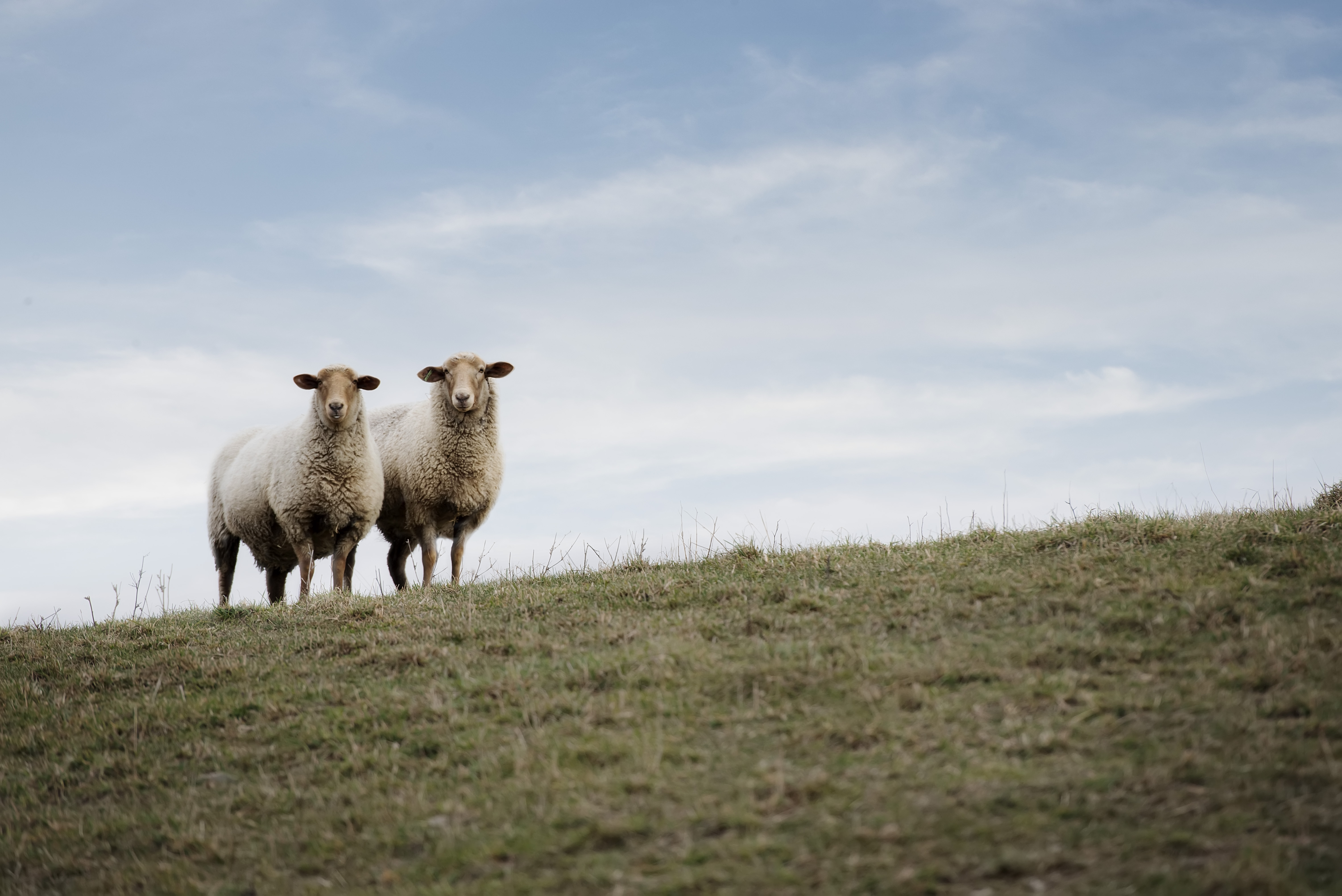 Maryland Sheep Breeders Association - Member public profile